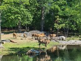 В зоопарке Нью-Йорка