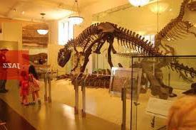 Музеи Нью-Йорка - музей Естественной истории