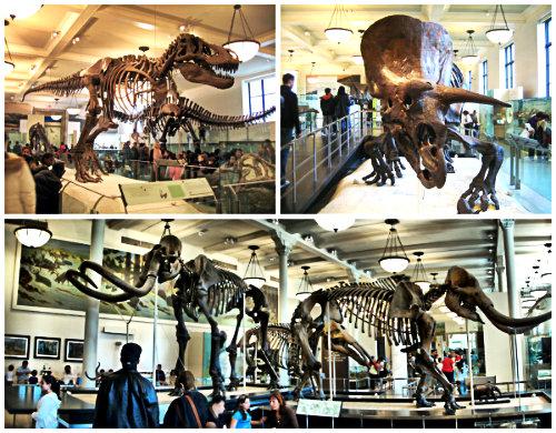 Музей естественной истории Нью-Йорк-3